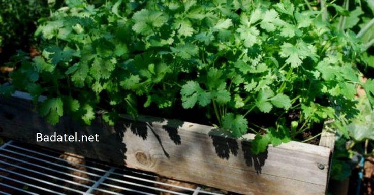 Táto bylinka odstráni z tela za 42 dní až 80% ťažkých kovov