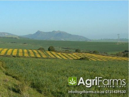 Lifestyle, wine and livestock farm for sale around Malmesbury in the West Coast district of the Western Cape http://www.agrifarms.co.za/west-coast/malmesbury/agf0212