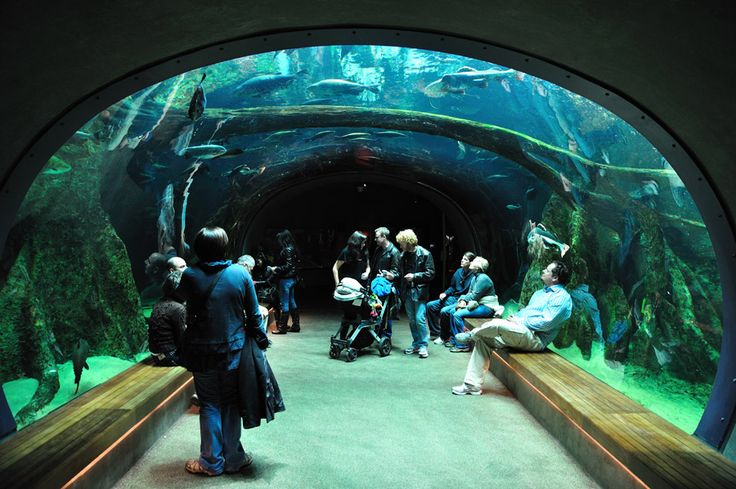 A Survey Of Awesome Aquarium Architecture Aquariums San