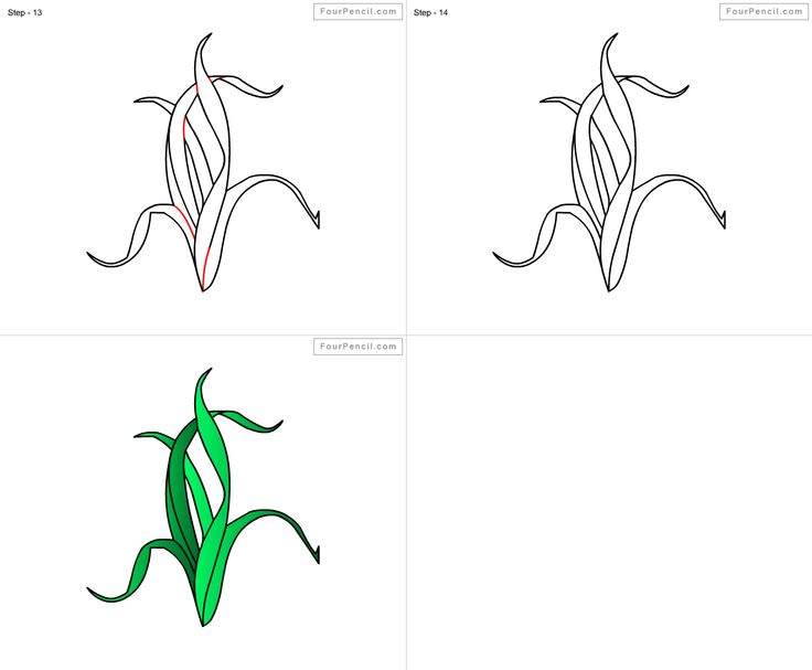 Line Drawing Kelp : Best how to draw sea images on pinterest colouring