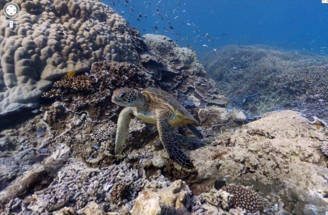 Google Underwater 'Street Views' of the Great Barrier Reef