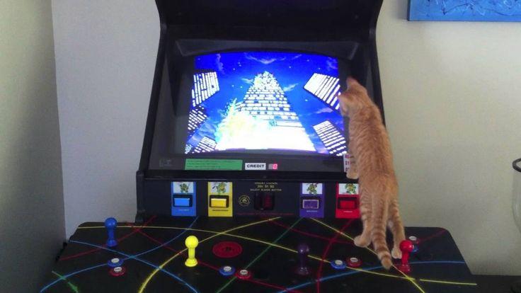 Teenage Mutant Ninja Turtle Video Game Machine and a Ginger Kitten #TMNT #Ginger Kitten #ArcadeGame