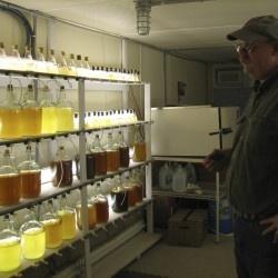 Machias professor makes lobster aquaculture breakthrough