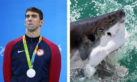 Discovery Channel Hypes Michael Phelps Vs Great White For 'Shark Week'