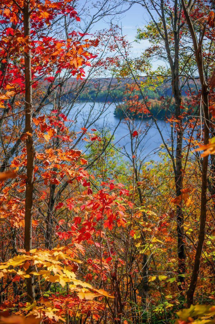 Autumn forest framing lake view (Algonquin Park, Ontario) by Elena Elisseeva E