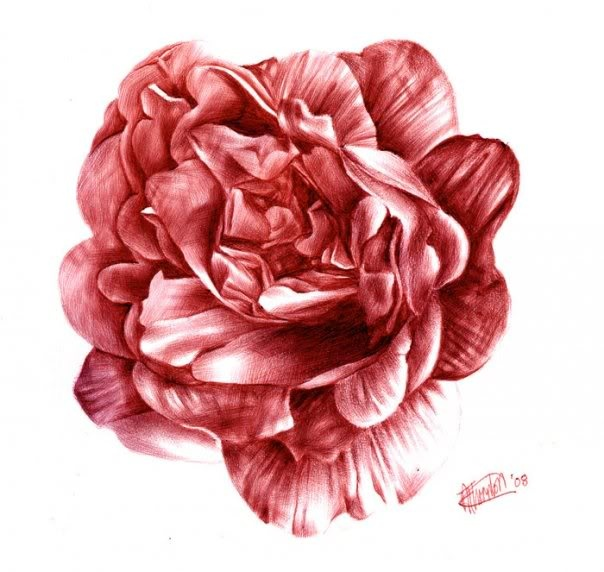 16 Best Images About Flower Drawings By Paul Alexander