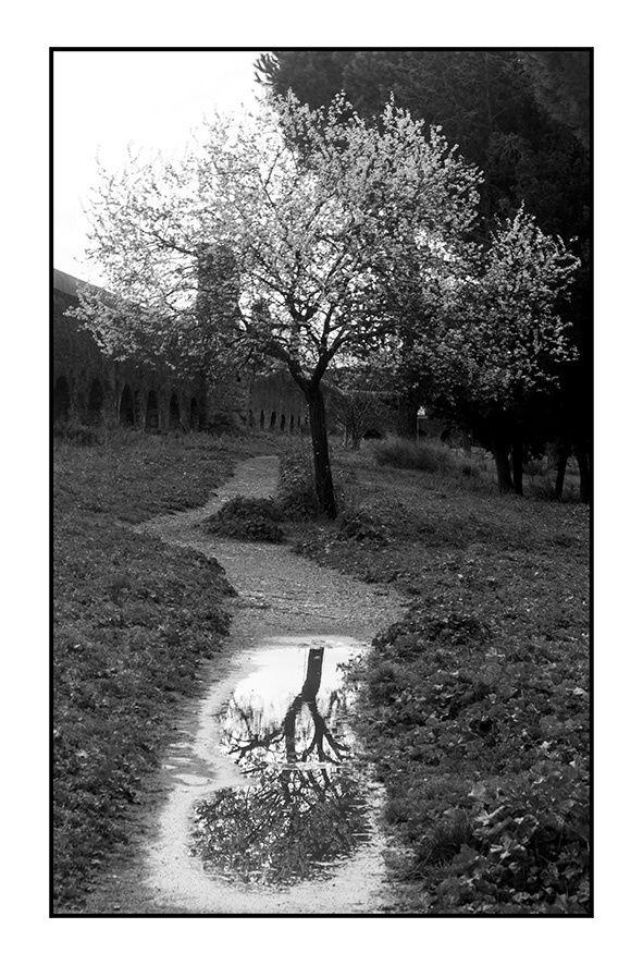 Riflessi in Bianco e nero photo by Morgan  Capasso