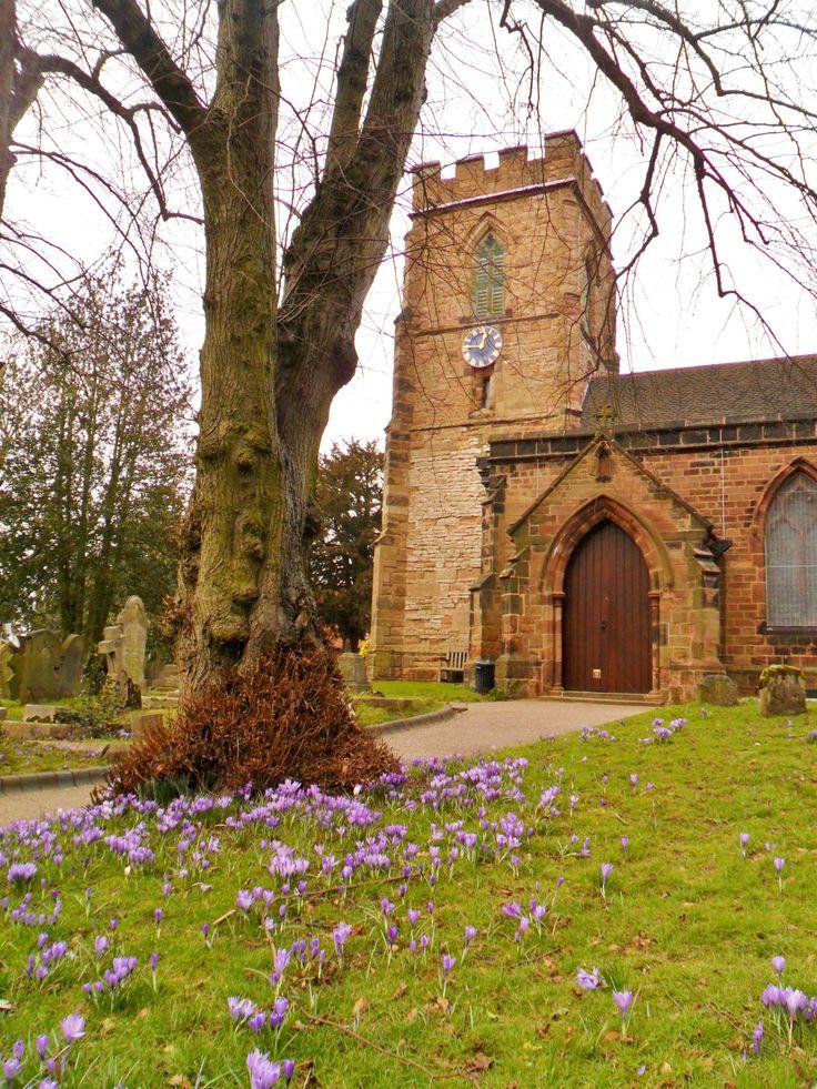 St. Mary's Church with Spring Crocus, Aldridge, Walsall, England (All Original Photography by vwcampervan-aldridge.tumblr.com)