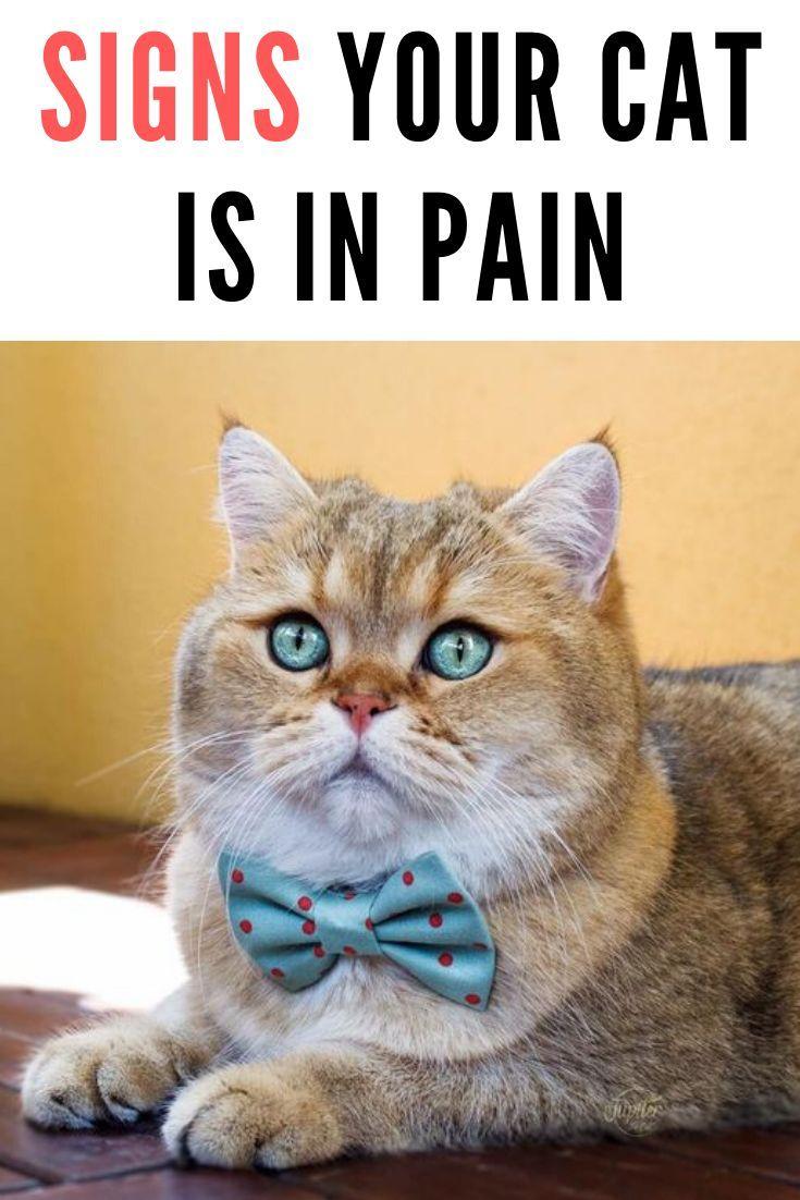 Pin On Cat Wellness