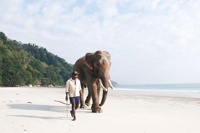 The Andaman Islands are just like the Maldives - an archipelago of tiny desert islands belonging to India, each a perfect paradise, a nipple of golden sand breaching up out of a gin-clear sea of blue.