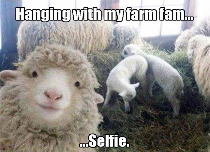 17 best ideas about farm humor on pinterest farm jokes - Funny pictures farm animals ...