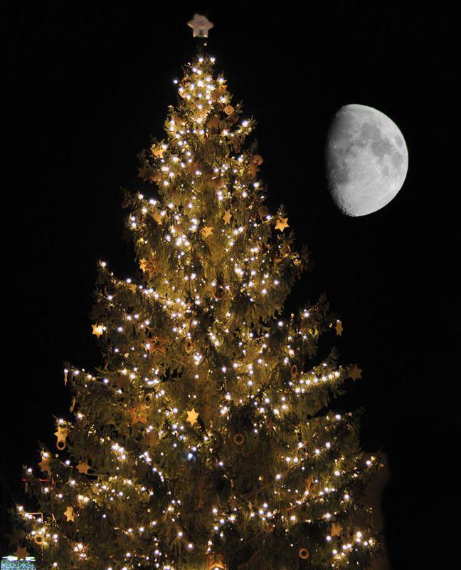 Merry Christmas: Christmas Things, Franco Mottironi, Amazing Pictures, Christmas Nigth, Christmas Ideas, Christmas Trees, New Years, Merry Christmas, Holiday Christmas
