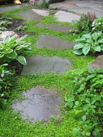 Bluestone with mazus -? So that's what it's called | See more