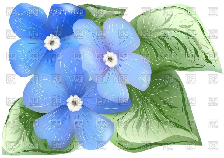 clip art forget me not flower - photo #46
