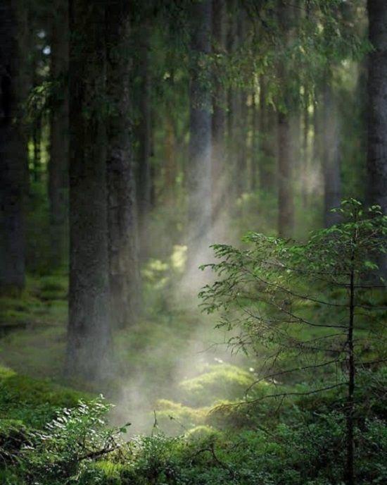 Ennyi: A legegyszerűbb út az univerzum megismeréséhez egy erdei vadonon keresztül vezet… - Németh György – Egy gyógyszerész feljegyzései