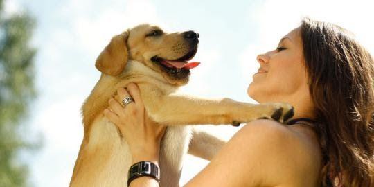 Ras Anjing Peliharaan Terbesar