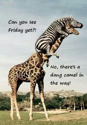 Like that my girlfriends had to explain the hump day camel in-between, cuz I didn't get it :) Someone said.