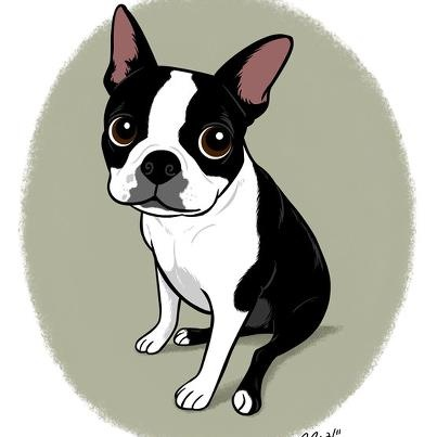 how to draw a boston terrier the gallery for gt simple boston terrier drawing 3542