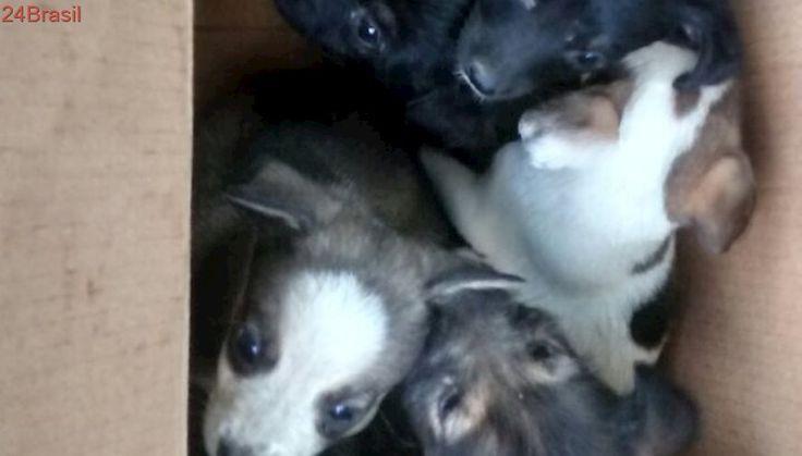 Cãezinhos são abandonados dentro de caixa de papelão em SP