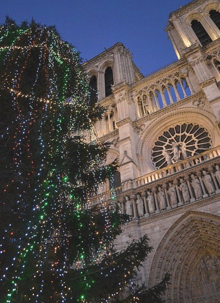 Notre-Dame de Paris.\\ Tous les ans, la cathédrale offre sur le parvis un sapin de plus de vingt mètres de haut.