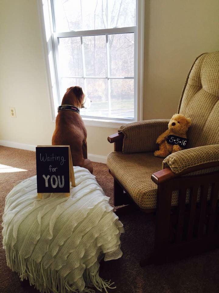 Pregnancy Announcement with my dog