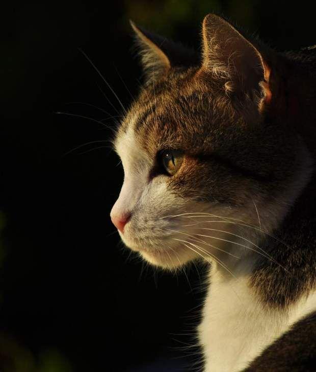 Photo du GEOnaute : iponTrouvez la meilleure assurance pour votre animal de compagnie grâce à ce comparateur en ligne