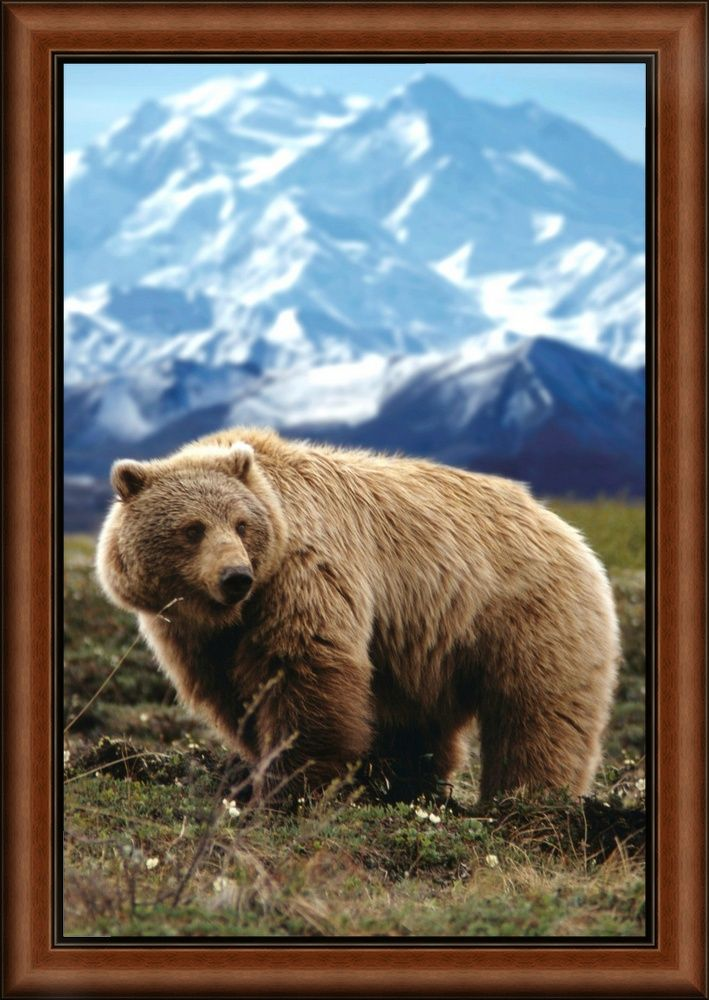 Grizzly On Tundra Near Mount Mckinley Bear Artwork Bear Art Grizzly