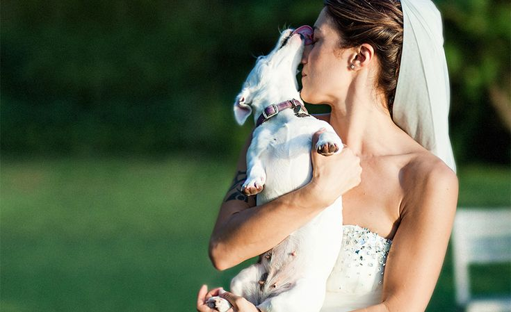 That's AMORE. the bride and her dog.  www.studiopensiero.it wedding photographer in italy