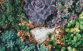 Suculente, Plante, Grădină, Natura