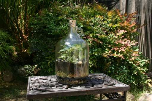 I want a terrarium so I can have plants without having to be around to water them