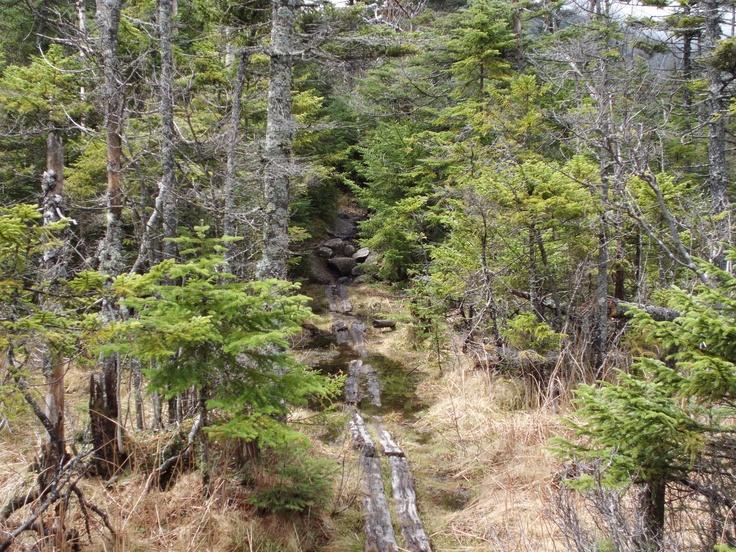 Into the woods, AT - Kinsman Ridge Trail
