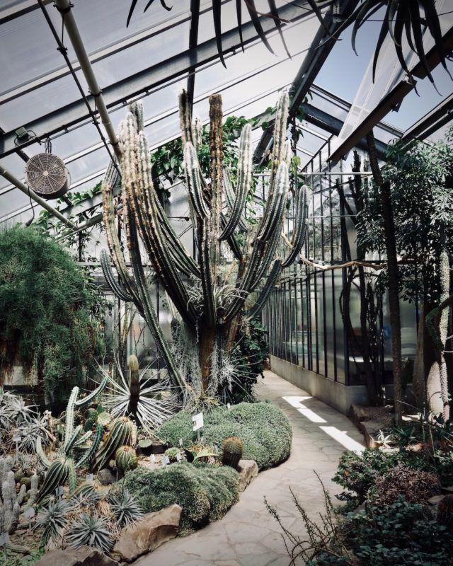 Ein Nachmittag Im Botanischen Garten Plants Botanischer Garten Bonn Bonn Deutschland Und Bonn