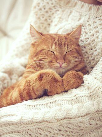 Torsul pisicilor si cele nouă vieți ale acestora. Informații interesante despre pisicuțe. #pentruanimale