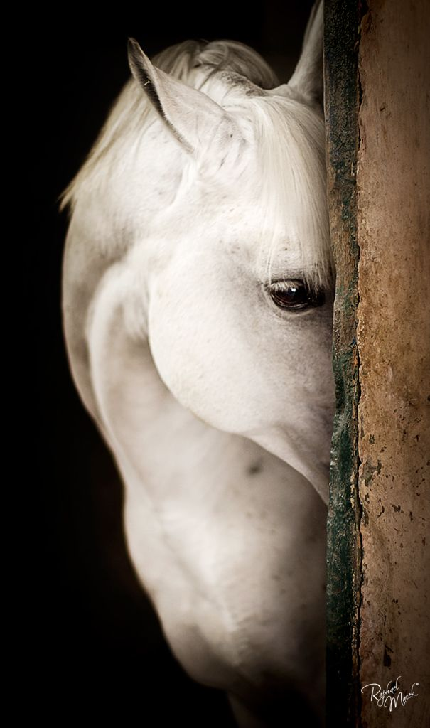 when I was a little girl I was obsessed with horses, not any horses Arabian horses