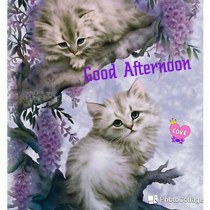 Good Afternoon sister,have a lovely time,xxx❤❤❤