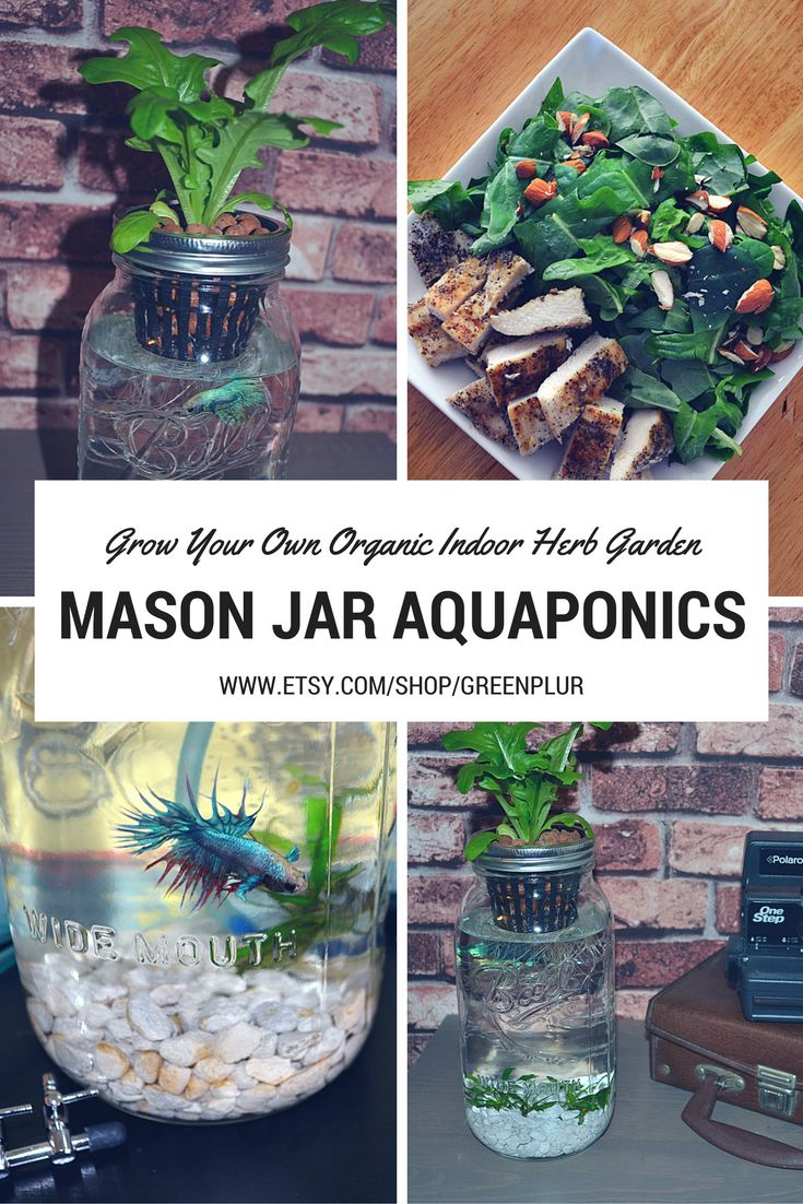 17 best images about aquaponics on pinterest gardens for Fish used in aquaponics