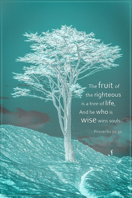 The fruit of the righteous is a tree of life, And he who is wise wins souls. Proverbs 11:30  Photographics by : Travis Silva