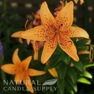 Tigerlily BlossomCandle Fragrance Oil
