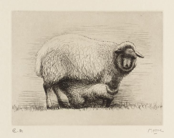 Line Drawing Of Sheep Face : Best henry moore sheep images