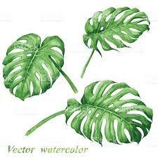 Risultati immagini per foglie tropicali