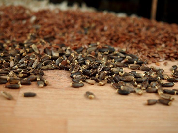 Semínka ostropestřce  http://www.kralovstvichuti.cz/bylinky/ostropestrec-plod