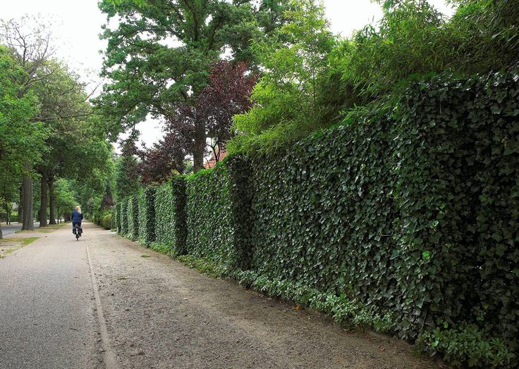 how to build a retaining wall over tree roots