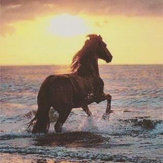 #horsebackriding #horsespirit #energetic #sunrise #sunrises #sea #seahorse #horses