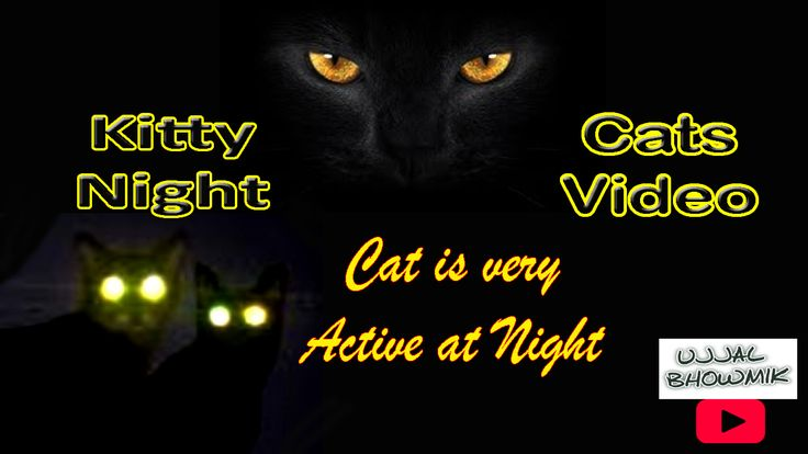 Kitty Night   Cat is very Active at Night   Funny Videos Compilation for kid #cat #cats #kitten #kittens #catsfeatures #catoftheday #cute #meow #CatsEyes #LoveCats #CatsVideos #Videos #youtube