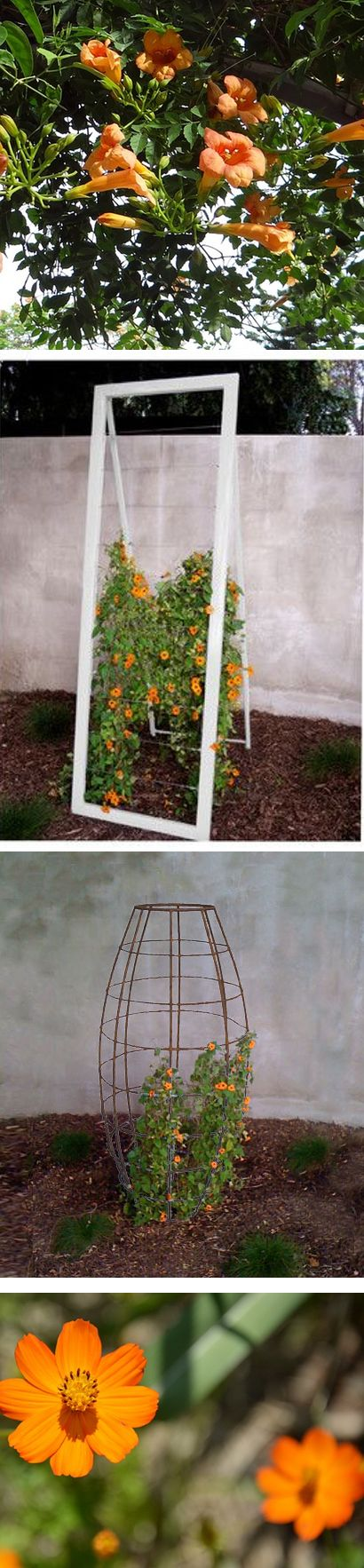 Climbers look lovely against modern trellises. Contrast or match the flower color in many beautiful combinations.