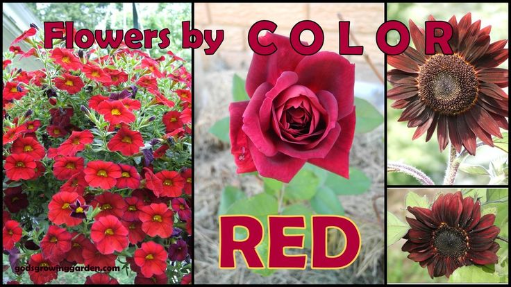 #flowers by Color - #red - by: http://www.godsgrowinggarden.com/2017/05/flowers-by-color-red.html