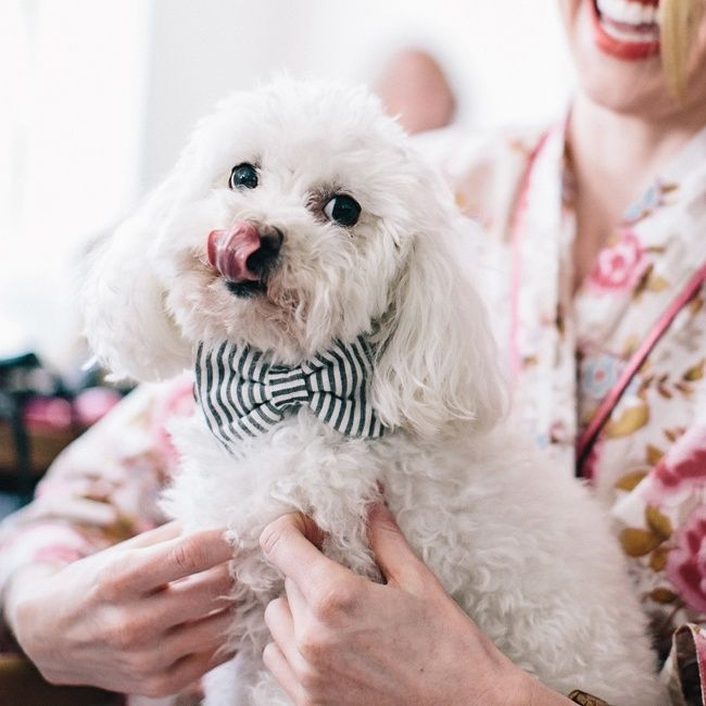 Adorable striped bow tie on this wedding puppy | VUE Photography