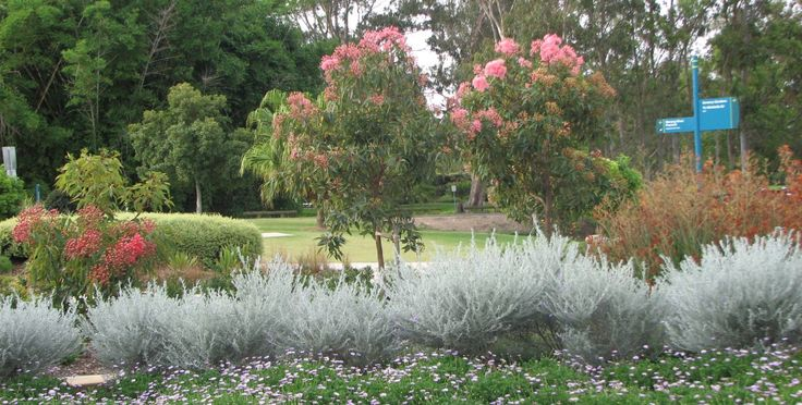 Sage bush adds contrast