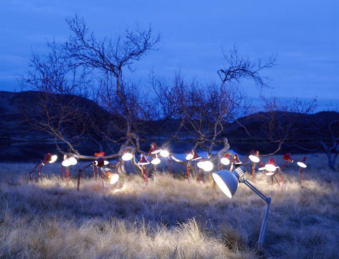 Great landscape lighting by runeguneriussen