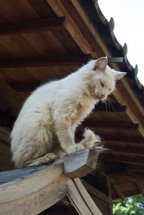 Pretty kitty on top of the roof.